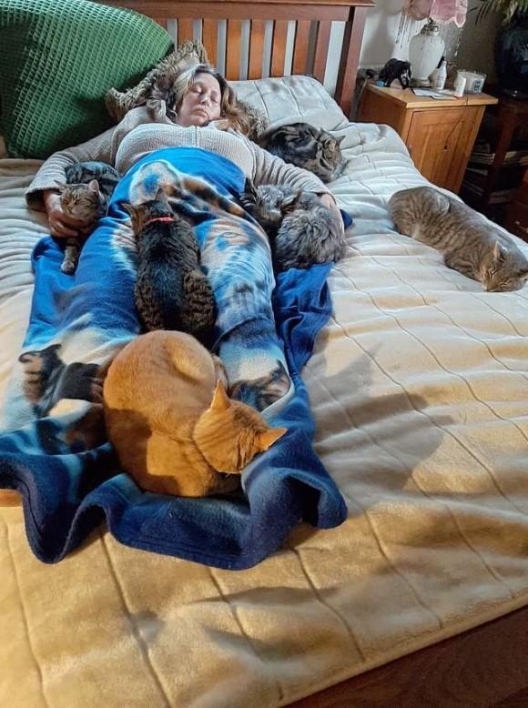 めったに集まらない5匹の猫がベッドの上に全員集合。手術を終えた飼い主をいたわるため