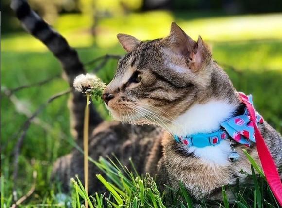 耳が2倍で幸せ4倍。4つの耳を持つ保護猫が一目ぼれされ永遠の家を手に入れる(アメリカ)