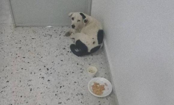 1か月以上毎日空港内で「誰か」を探し回り、待ち続けながら失意の中息絶えた犬(コロンビア)
