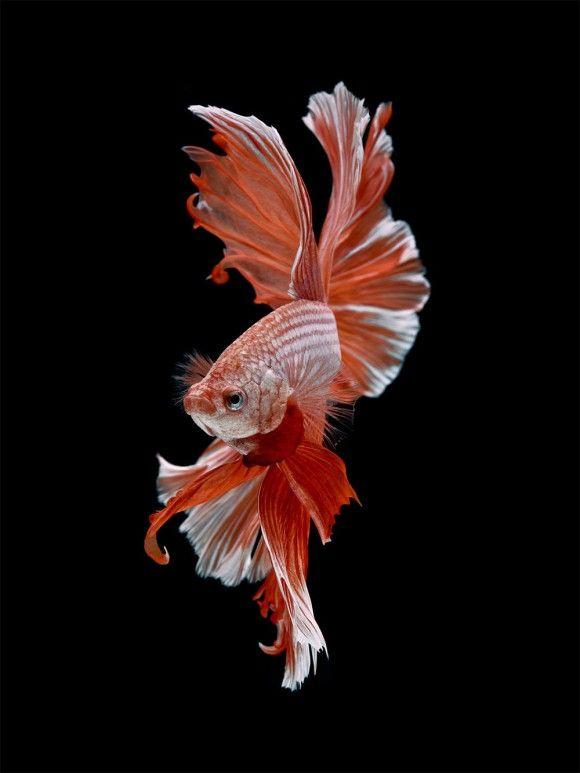 fish-9_e