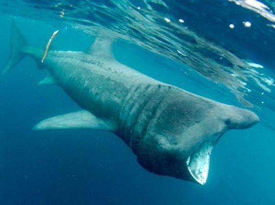 sharks_09