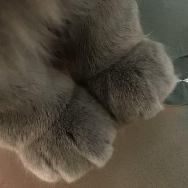 猫の魅惑の前脚ミトン