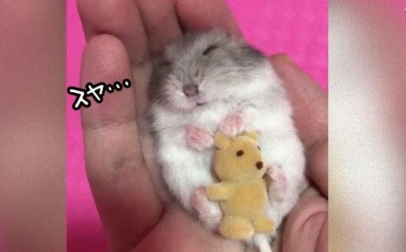 世界中で大ヒット。手の中でぬいぐるみを抱っこしてスヤスヤと眠るハムスターの動画