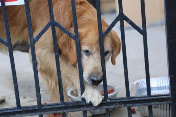 教会の前に捨てられた犬は一晩中飼い主が戻ってくるのを待っていた。