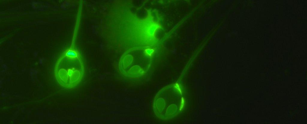酸素いらずの多細胞生物