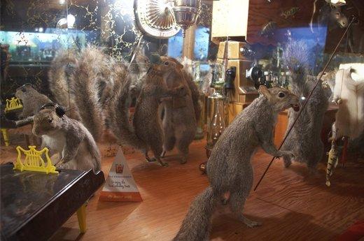 squirrels_dancing