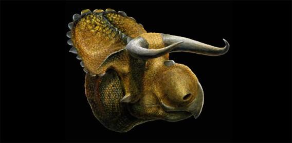 大きな鼻と長く曲がったツノを持つ新種の恐竜が発見される(米ユタ州)
