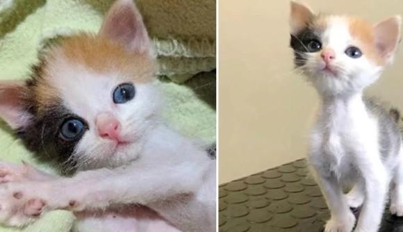 小さくても大きな生きる意志があった。栄養失調で被毛を食べて生き延びていた子猫が美しい三毛猫になるまでの物語