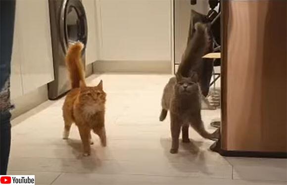 猫のシンクロ率の高さ!ほぼ同じ動きと歩調で餌場に向かう2匹の猫