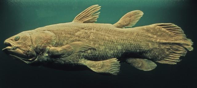 再発見された古代魚、シーラカンスが絶滅の危機に直面