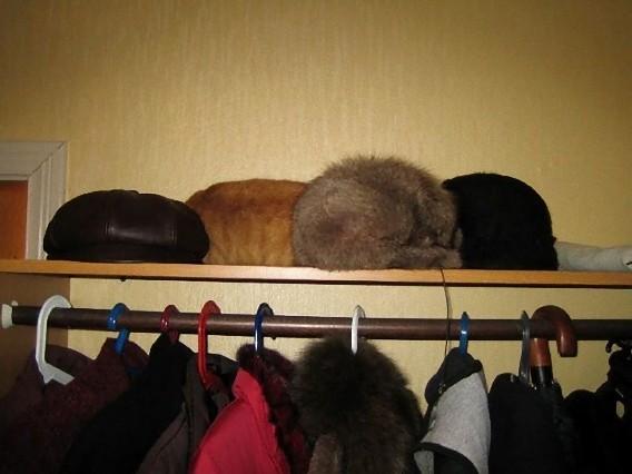 find_cat_640_19_e