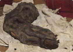 エジプトで発見された巨人ネフィリムの指?指の大きさはなんと96センチ