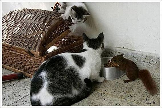 cats_and_squirell_10