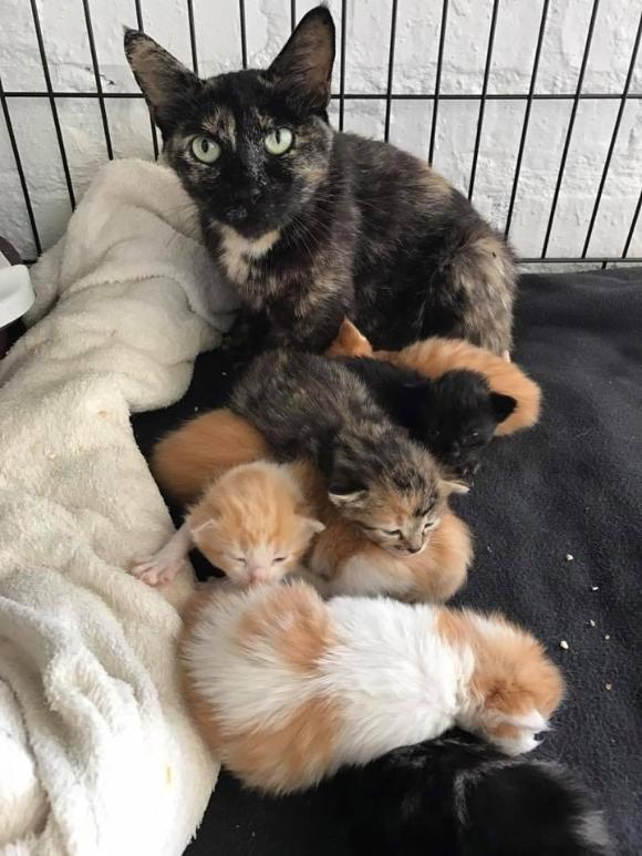 猫ってそういう所あるから。民家の隙間で出産した猫の保護物語