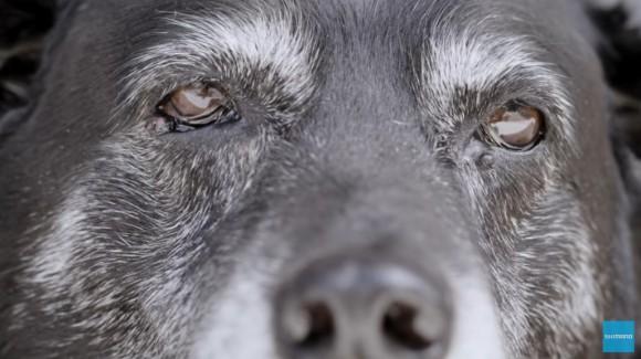 飼い主と山の中を走り抜けるのが大好きだったトレイル犬の引退後をテーマにしたシマノのCMに涙
