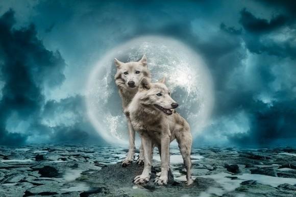wolves-2969361_640_e
