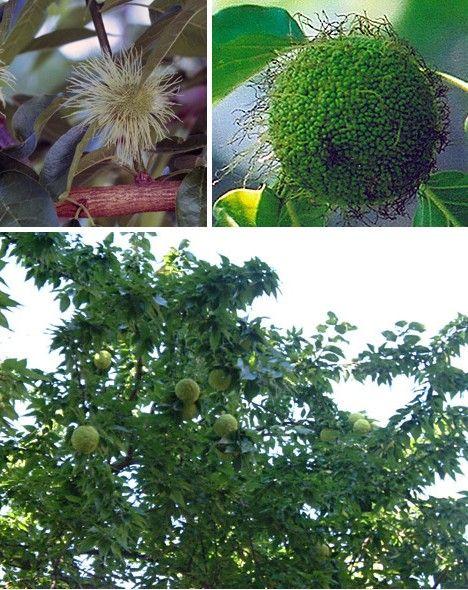 amazing_fruits_5
