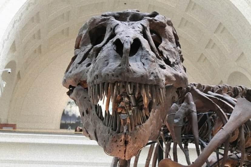 tyrannosaurus-447801_640_e