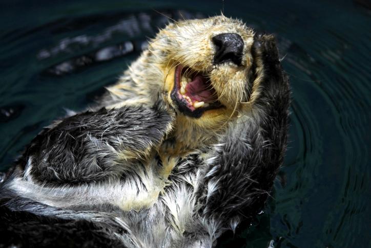 海洋哺乳類に新型コロナ感染のリスク