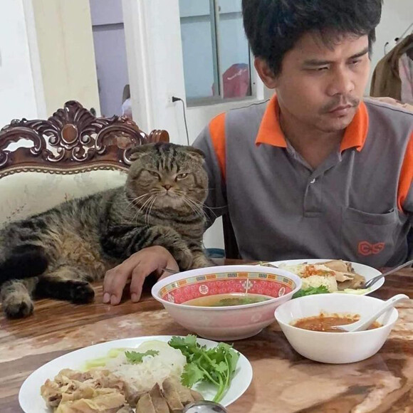 「猫に夫を奪われました」そう語る妻の嘆きを証拠写真と共にご覧ください
