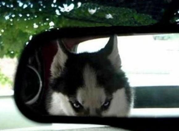 それは「おこ」ですか?まるで怒っているように見える動物たちの面構え