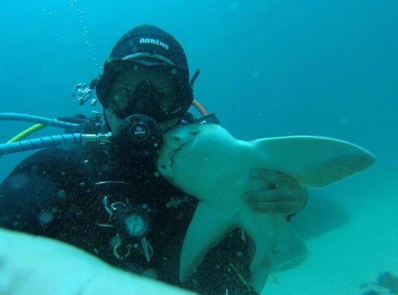サメとか結構なつきがちなようだ。サメと親友になったというダイバーのイチャイチャ動画