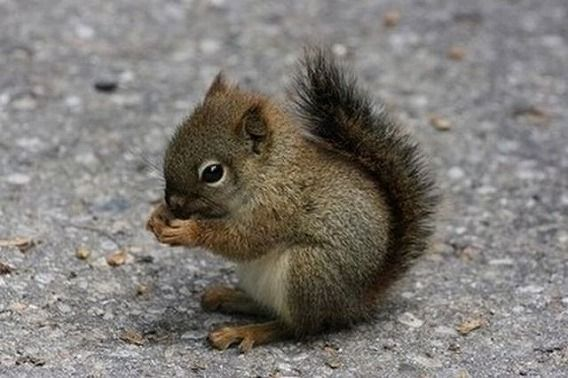the_smallest_pets_640_09