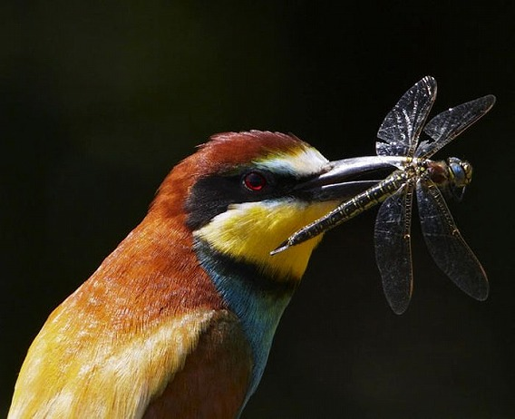 beautiful_photographs_of_birds_02