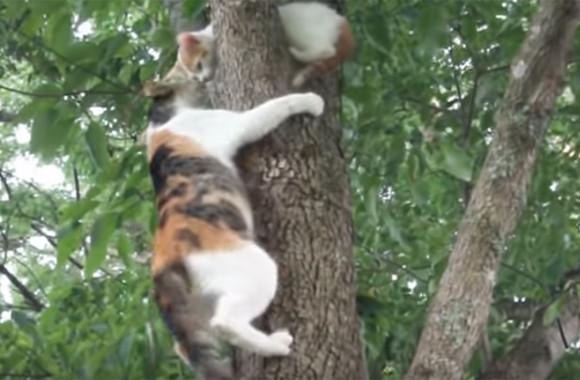 木から降りられなくなった子猫。すぐさま助けに向かうも木からしがみついて離れない。そこで母猫がとった行動は?