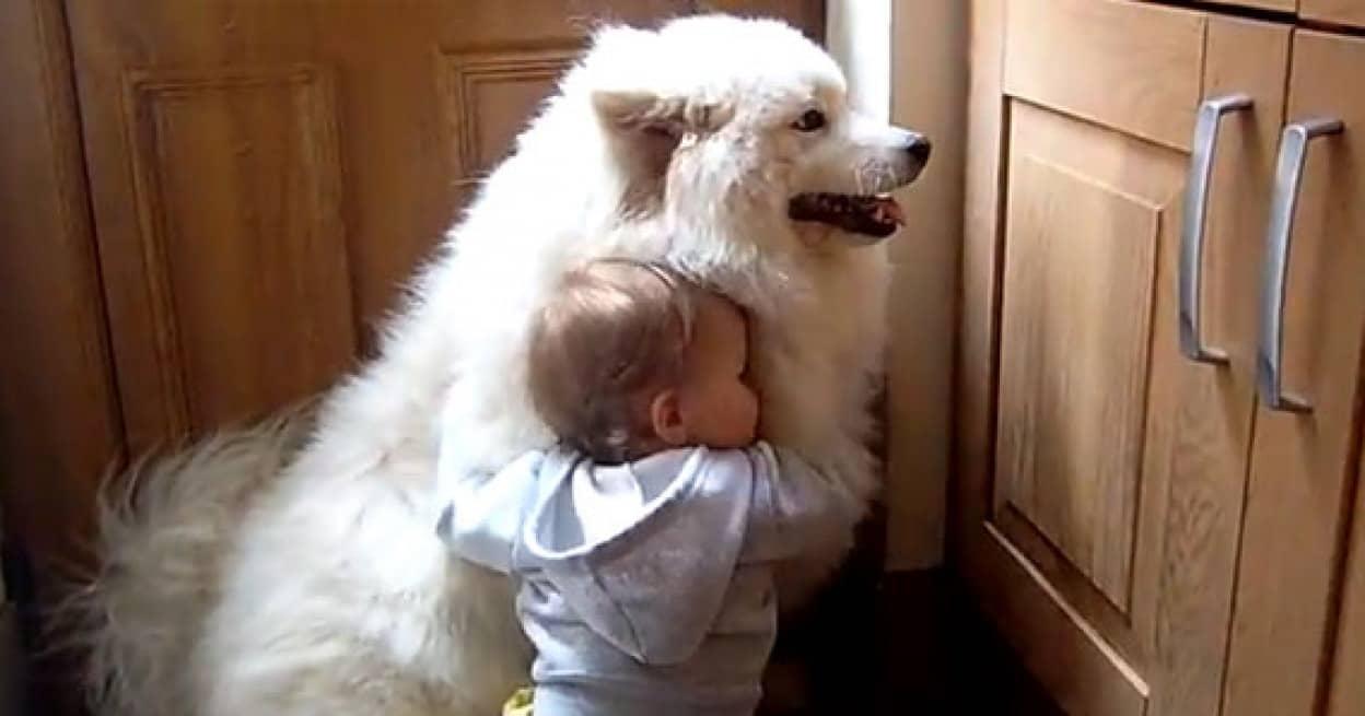 白い でかい 犬