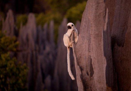 Madagascar_15