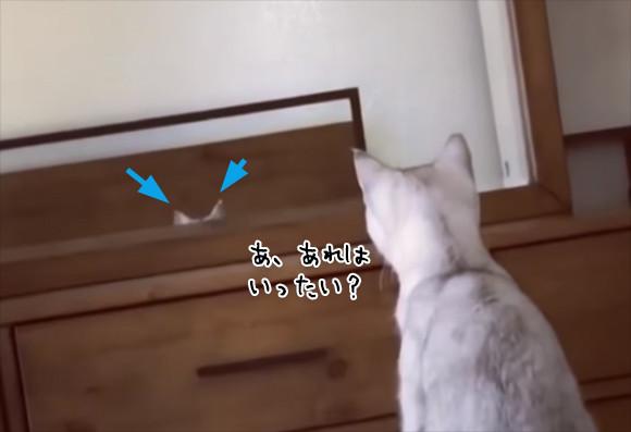 あ、あれは...吾輩の耳?で、こうなった。猫が鏡に映った自分の耳を認識しているかもしれない件に関して