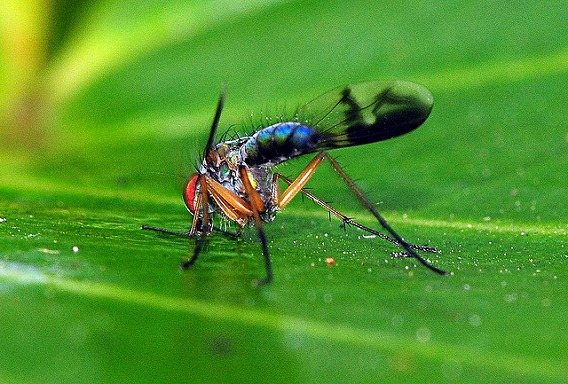 insect drinking drink 16