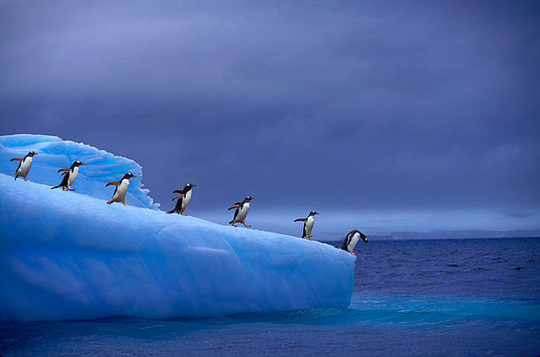 penguins_14