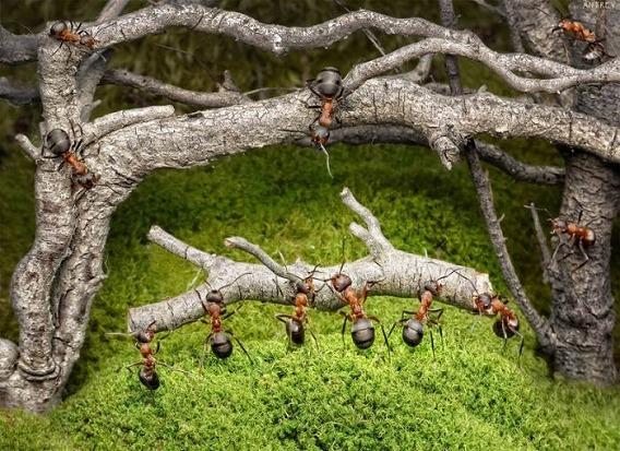 ants_14