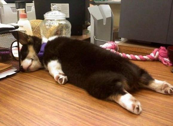 dogs_sleeping_02