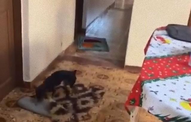 おばあさんを守るための犬の自発的行動