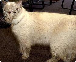 2つの顔を持つ猫が12年という長寿でギネス記録認定(アメリカ)