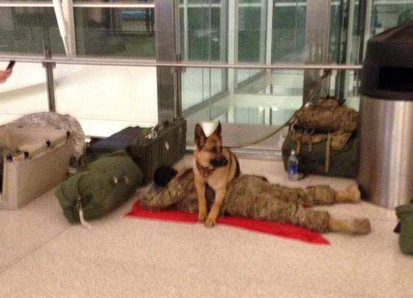 空港で横になり束の間の休息をとる兵士を必死に守ろうとする犬