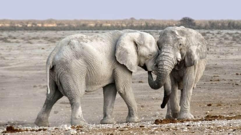 elephant-1170108_640_e