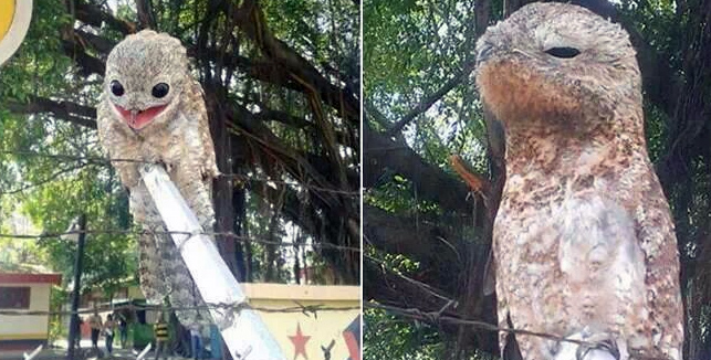この怪しさが癖になる。アニメをリアル化したかのような怪鳥の写真(ベネズエラ)