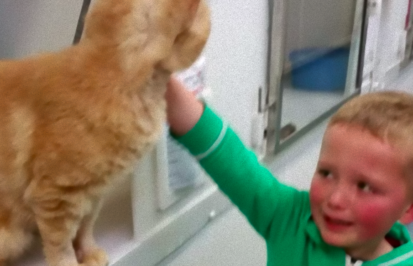 愛猫をが行方不明に。1年半探しても帰ってこないので、新たに猫を迎え入れようと施設に行ってみたらなんと!!