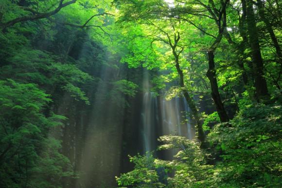 荒れ果てた土地に400万本の苗木を植え、20年近い年月をかけ、見事な森を復活させた夫婦の物語(ブラジル)