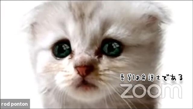猫の姿でリモート会議に出席した弁護士
