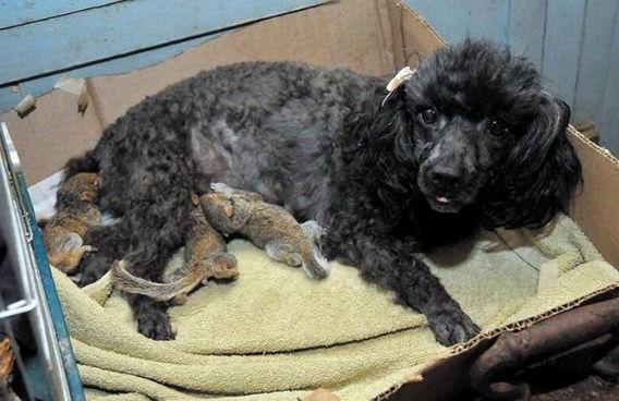 animal_adoptions_04
