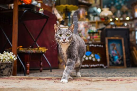 ニューヨークで会える。ニューヨークの様々な店にいる約40匹の猫たちを激写「Shop Cats of New York」