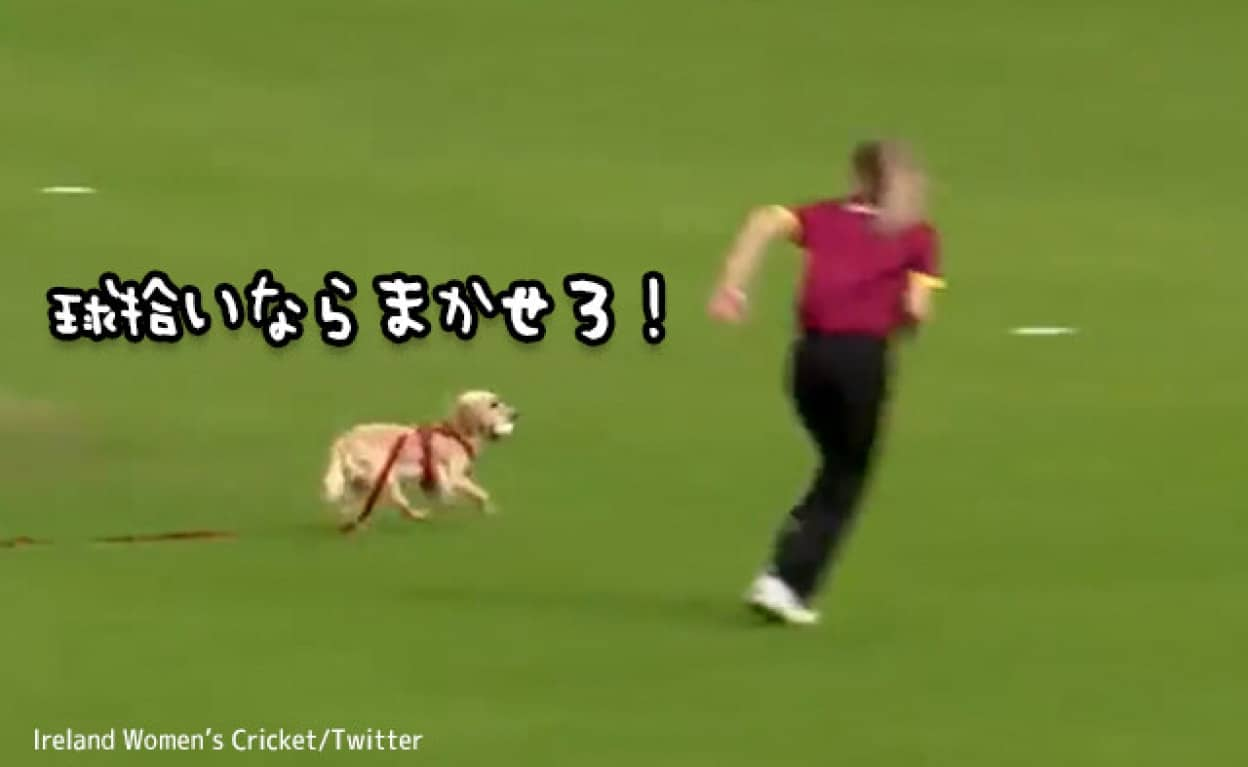 クリケットの試合会場に乱入した犬が、いち早くボールをキャッチするという珍事
