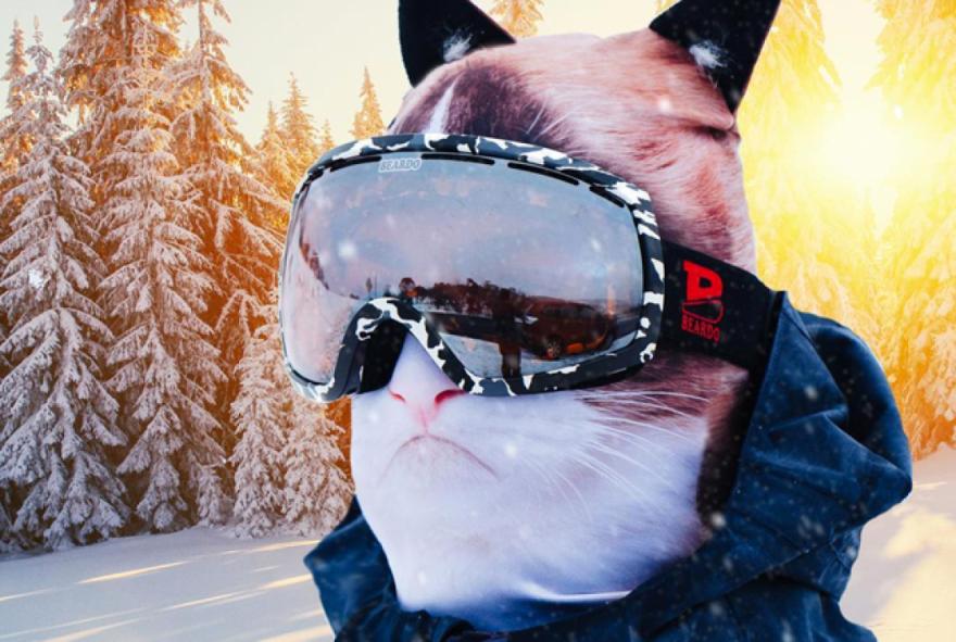 ゲレンデが猫三昧。猫仕様なあったかフェイスマスクがナウオンセールっぽい。