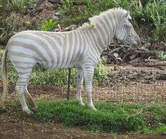 albino-9