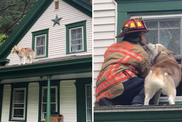 屋根に上って降りられなくなくなった犬、消防士に助けられやさしくキスをする(アメリカ)